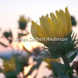 James Delbert Anderson Nature Photography