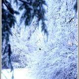 Narnia?