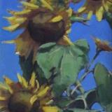 "Sunflowers 18x36"" oil"