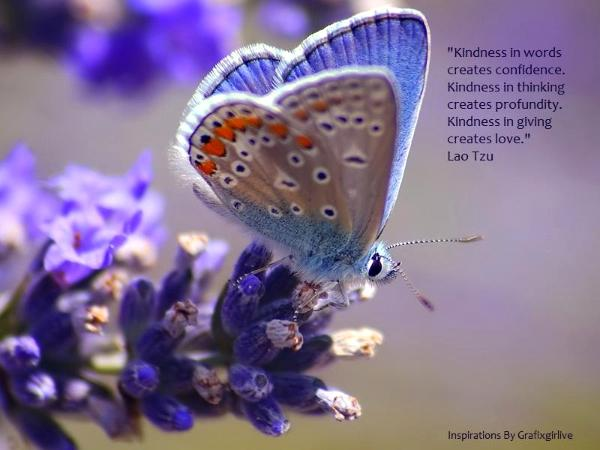 butterfly essays Lifecycle of a butterfly introduction lifecycle refers to the stages of growth and development of a living thing all living things go through different.