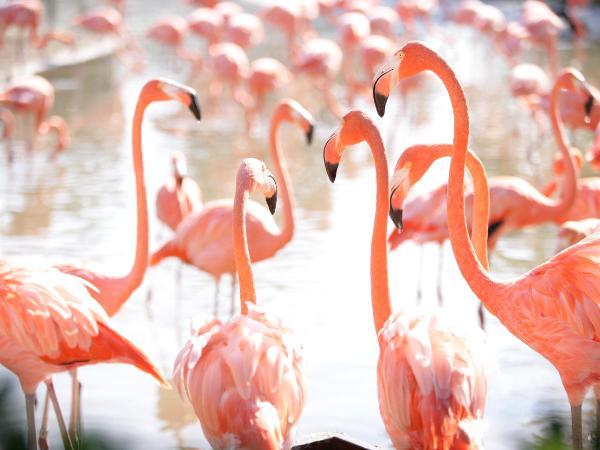 Flamingo convention 56...