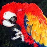 MARILYN GRAME ART