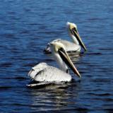 K.M.Knight Custom Paint & Design