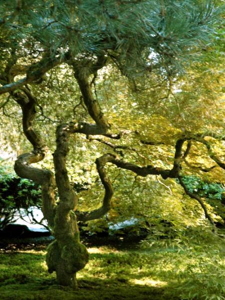 Winding Tree Art By Denise Emery