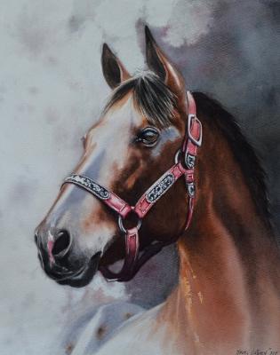 The beauty of the Appaloosa Horse, 40cm x 50cm, 2019