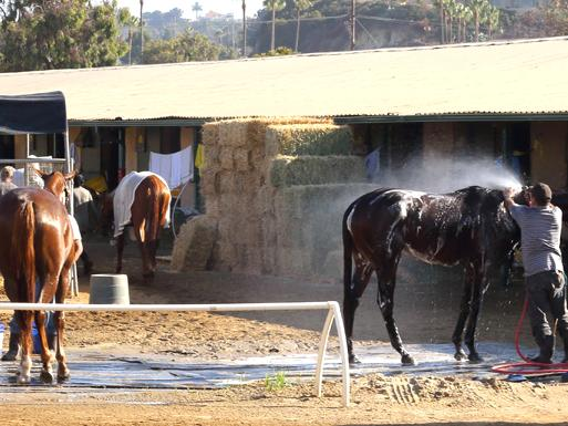 Behind the Scenes Del Mar Racetrack 7 am Thoroughbred Horses