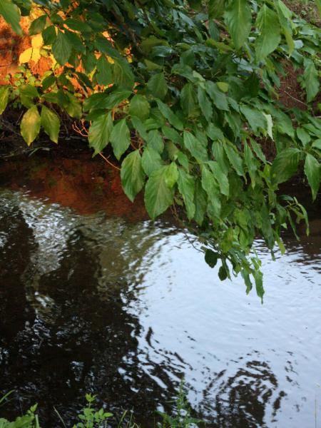 North Coventry Stream