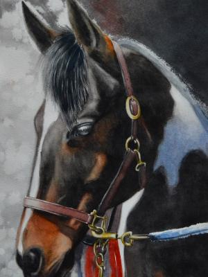 The beauty of the American Paint Horse, 38cm x 56xm, 2019