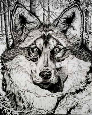 Commissioned Portrait of Mixed Breed Wolf/Dog