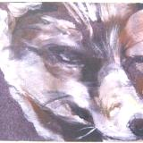 Wolf Pup (sold)