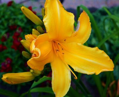 Lena's garden 6