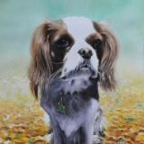 The autumn dog, 38cm x 56cm, 2021