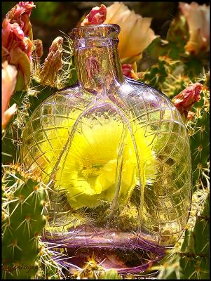 Bottle # 7