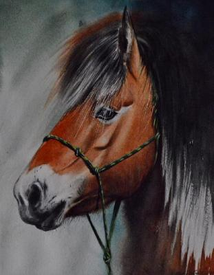 The beauty of the Norwegian Fjord horse, 38cm x 28cm, 2020