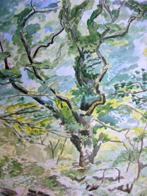 Oak trees on the banks of the river Teign