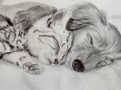 Furry Sleepy Heads