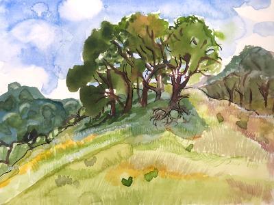 Briones Park Hilltop Trees