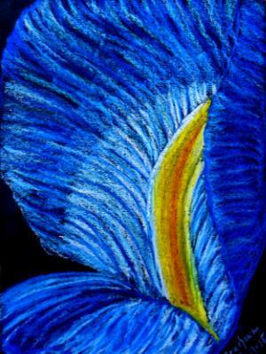 Pedal of Blue Iris