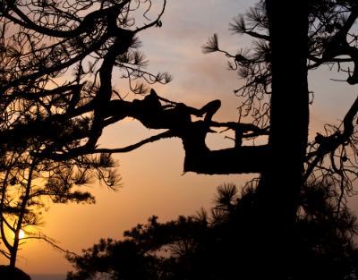 Torrey Pines Haiku