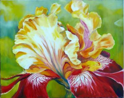 A favorite Iris