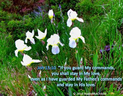 Joh 15:10