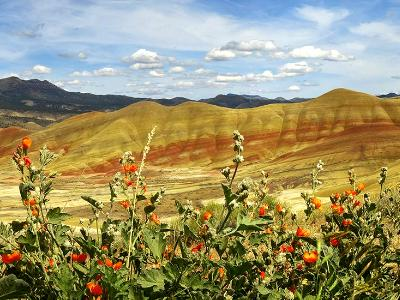 Painted Hills & Bright Red  Desert Flowers