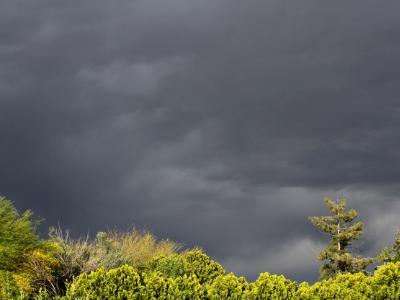 Phoenix Storm