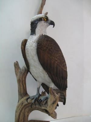 Life size Osprey
