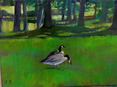 Geese in park