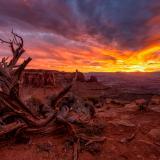 Grand Viewpoint Vivid Juniper Sunset