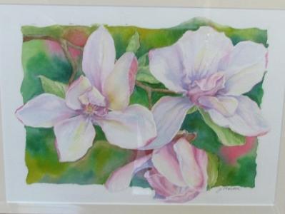 Jane Magnolias