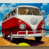 BUSFULL OF DOGS ON THE BEACH