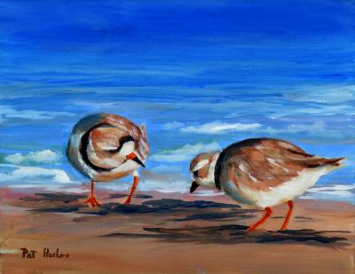 Piping Plovers  oil  11x14 SOLD