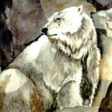 Shivers-Polar Bear