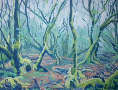 Marshland willows near Welcombe