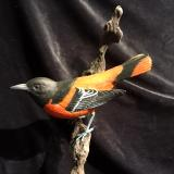 Life size Northern Oriole