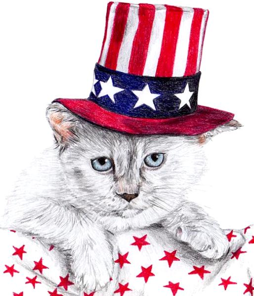 4th of July Cat