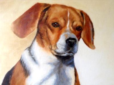 Buddie 16x20 canvas in oils