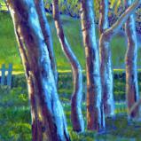 Eucalyptus Study III