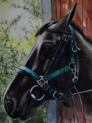 The quarantine horse (THE BEAUTY OF THE HANNOVERIAN HORSE), 30cm x 50cm, 2020