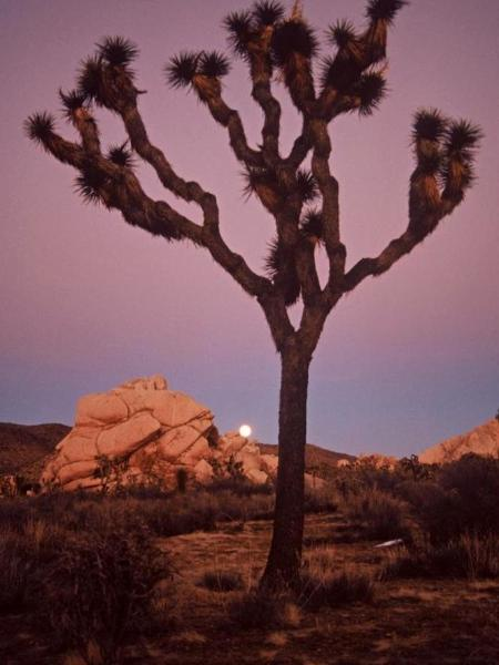 Moonrise - Joshua Tree National Park