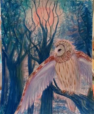 Barred Owl under Super Moon