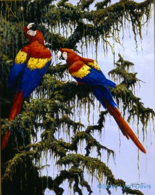Afternoon Chat, Scarlet Macaws