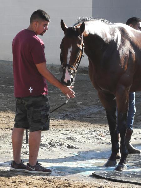Del mar Racetrack Stable Yard Thoroughbred Horses