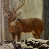 Buck in Winter Snow
