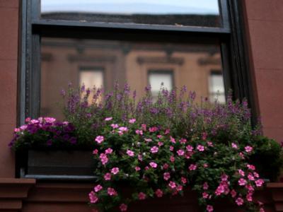 Brooklyn Heights Windowbox