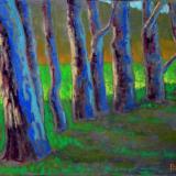 Eucalyptus Study II