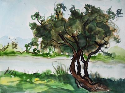 Trees at Aquatic Park
