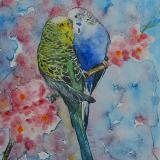 Custom portrait of a couple of parakeets, 35cm x 50cm, 2017
