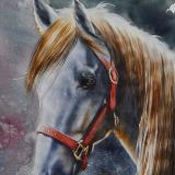 The beauty of the Tennessee Walking Horse, 56cm x 38cm, 2018